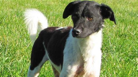 kleine hunde suchen ein neues zuhause sonnenhof hunde suchen ein neues zuhause ratgeber bild de