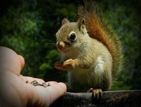 baby squirrel feeding time rachel flickr