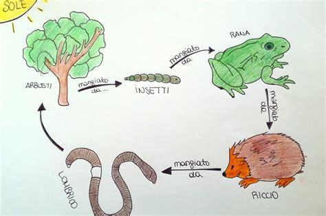 catena alimentare uomo reti alimentari nel bosco