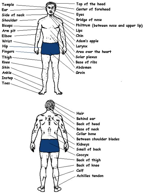 pressure points karate stances strikes and vital points