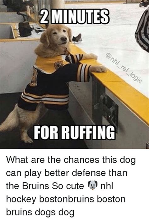Bruins Memes - bruins hockey memes www pixshark com images galleries