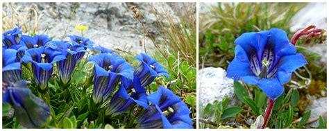 nomi fiori di montagna fiori di montagna ortaggi passione