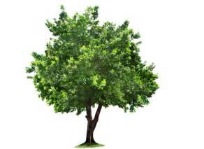 image of tree beautiful tree png png mart