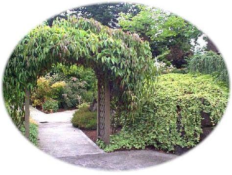il giardino di emilia hazelip aprile 2012 orto cittadino sinergico