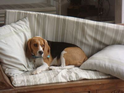 beagle bed and breakfast beagle bed and breakfast 28 images the best 28 images
