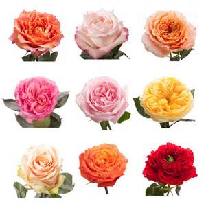 Flower Delivery With Free Shipping - choose your colors garden roses garden roses roses