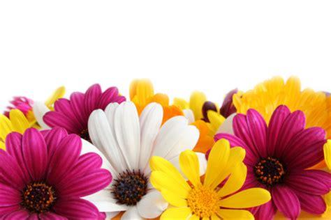 Jns May Real Pict carte virtuelle fleurs color 233 es