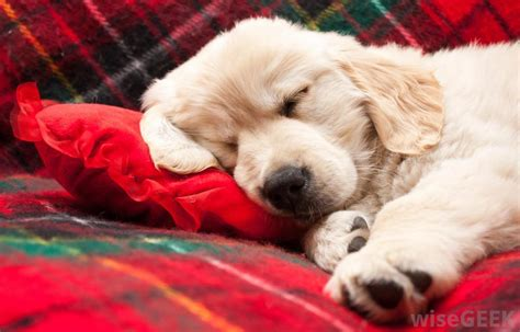 sleeping pills for dogs how do i choose the best sleeping pills with pictures