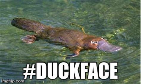 Platypus Meme - platypi take selfies too imgflip