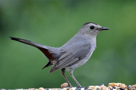 backyard bird identification quiz