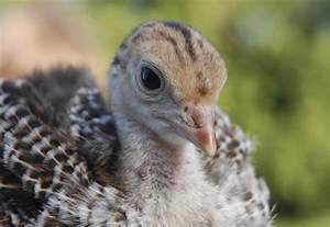 10 more lesser known names for baby animals mental floss