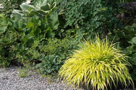 ornamental grass landscape ideas slideshow