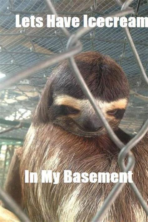 Funny Sloth Pictures Meme - 13 best dirty sloth images on pinterest sloth memes