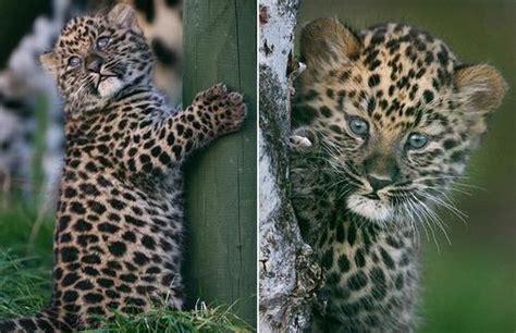 Topi Baseball Sugar Glider Hamster Tupai Bird baby jaguar cub n tiny