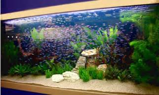 Best Fresh Water Fish Tanks