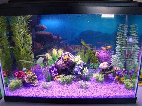 aquarium decoration ideas freshwater laurenj s freshwater tanks photo id 36779 full version