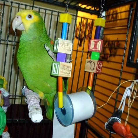 Junior Block by Junior Block N Roll Bird Large Bird Toys Funtime Birdy