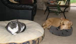 cats stealing dogs beds itt cats stealing beds ign boards