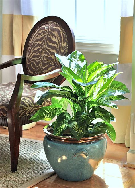 10 houseplants that clean the air urban planters 10 houseplants that clean the air page 3 of 11