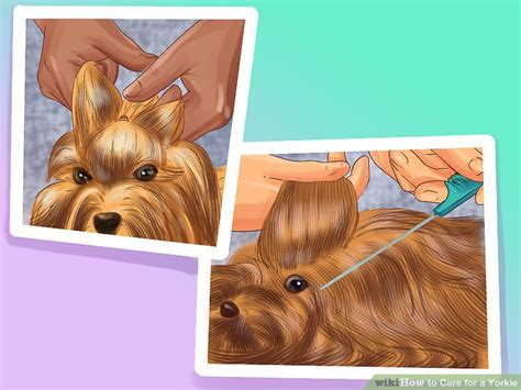 leave in conditioner for yorkies how to care for a yorkie with pictures wikihow