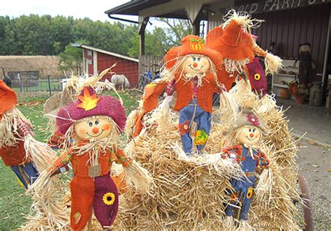 scarecrow decorations fall pumpkin patch and corn maze at pigeon roost farm and great