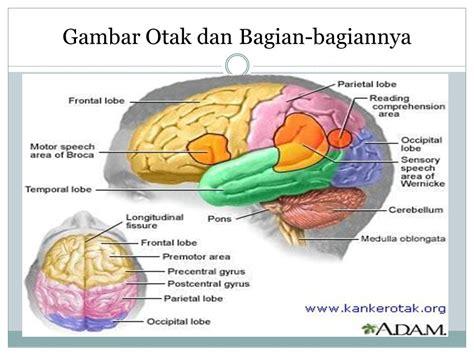 sistem saraf pada manusia ppt