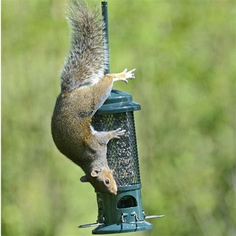 the squirrel buster 750ml squirrel proof bird feeders