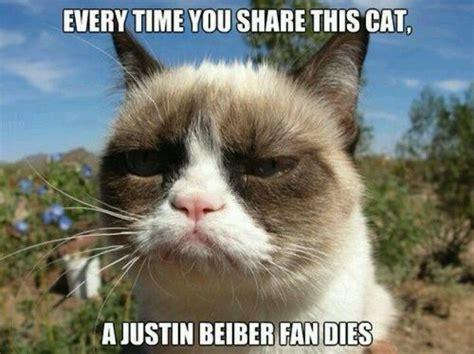 Tard The Cat Meme - tard the grumpy cat christmas tard tard the grumpy cat