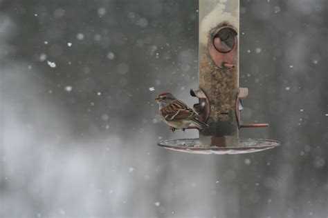 tips for winter bird feeder maintenance