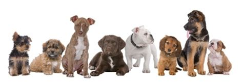 the four types of dogs every business needs how to build the right team to grow your business and a balanced books food explained