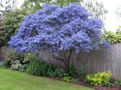 small flowering shrubs for landscaping best 25 evergreen shrubs ideas on
