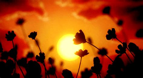 Format Gif Tumblr | flowers sunset gif find share on giphy
