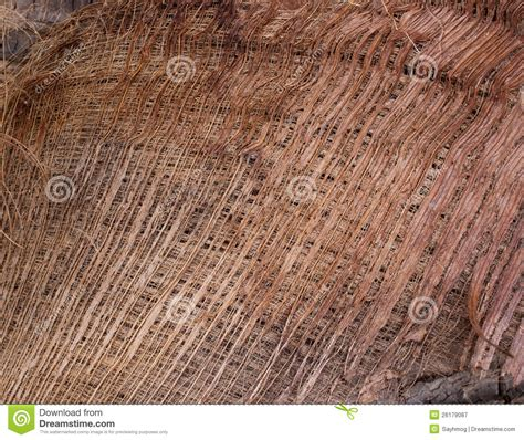pattern background of fiber on coconut tree stock image