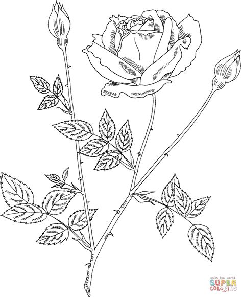 intricate rose coloring pages intricate rose coloring page coloring home