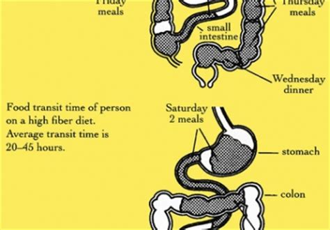 Stool Transit Time by Bowel Transit Time Causes Symptoms Treatment Bowel
