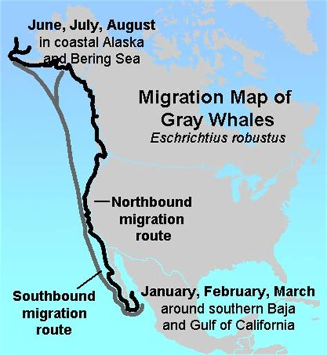 migration pattern of blue whale gotbooks miracosta edu oceans