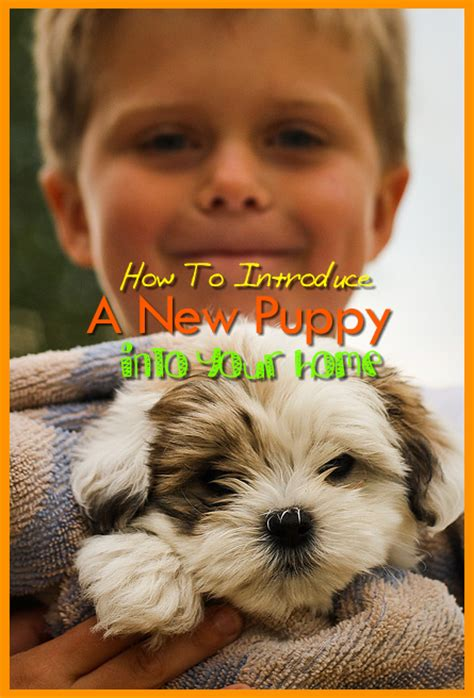 Introducing My New Puppy by Puppies And Introducing A New Puppy Into A Home With