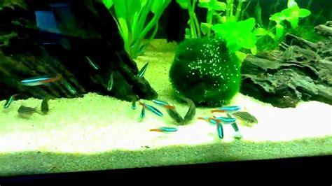 Aquarium 100 L by Aquarium Amazonien 100l