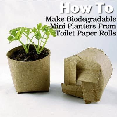 biodegradable plant pots growing containers for plants how to make biodegradable mini planters from toilet paper