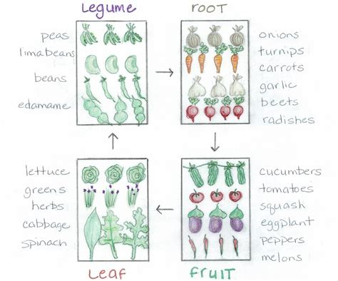 Crop Rotation Made Easy   Bonnie Plants