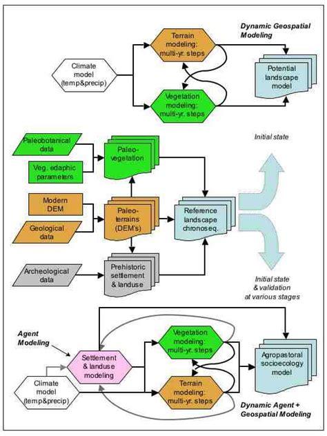 human evolution flowchart human evolution flowchart