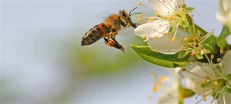 homemade bee repellent doityourselfcom