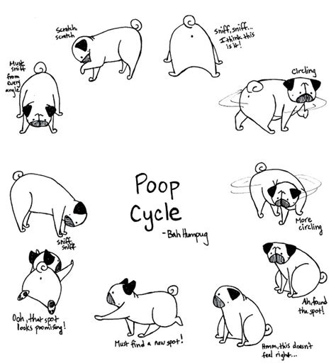 cycle of a pug 17 best images about pugs on asparagus pilates and t shirts