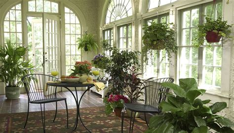 plants in home care for houseplants