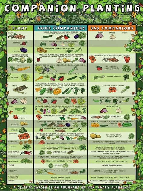 Southern California Vegetable Gardening Southern California Garden Guide Basic Gardening Easy