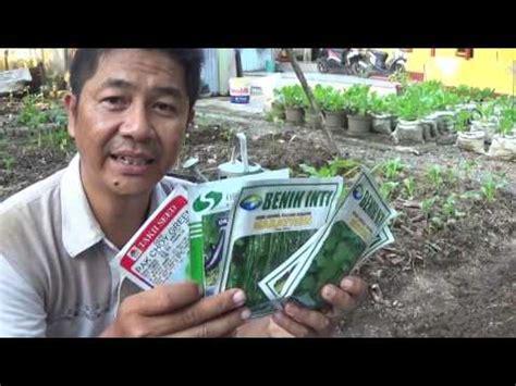 Bibit Durian Bawor Dongkelan bibit videolike