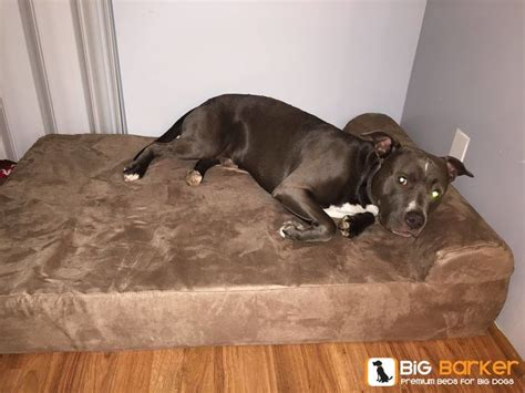 dog beds for pitbulls 1000 images about big barker beauties on pinterest
