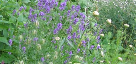 Garten Winterfest Machen Lavendel by Ziergr 228 Ser Winterfest Machen So Gelingt Es