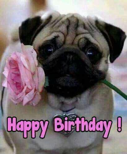 Happy Birthday Pug Meme - birthday pug puggy love pinterest birthday pug