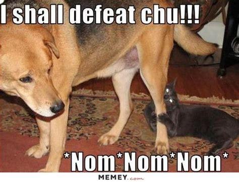 Dog Bite Meme - die cats suchen noch streunende wildkatzen page 17